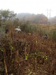 Removing Invasives