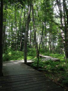 liz harvey – cool trail bridge winding